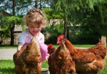 Pet Therapy con le galline | TuttoSulleGalline.it