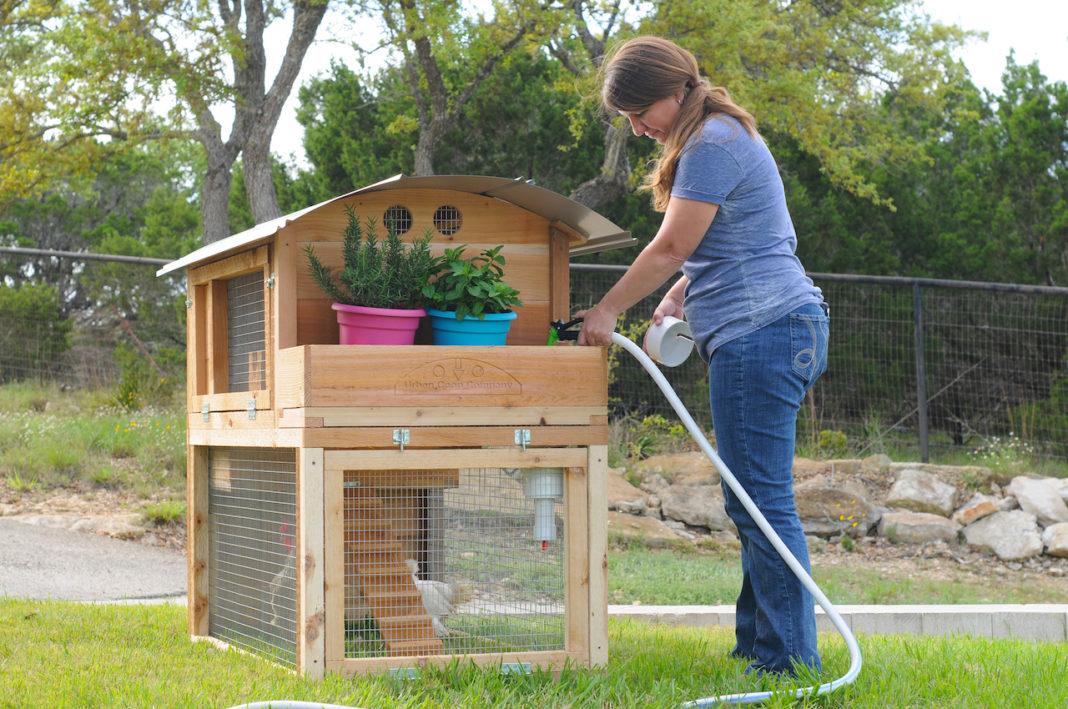 Abbeveratoio per galline anche per pollaio domestico o pollaio urbano