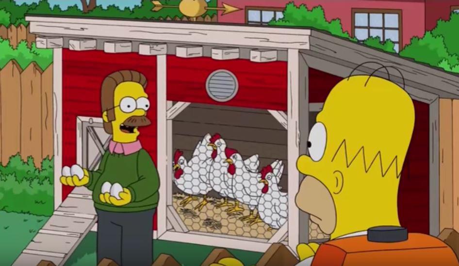 Flanders con le uova del suo pollaio domestico
