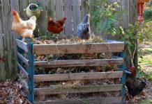 Pollina, concime biologico naturale per orto e piante | TuttoSulleGalline.it