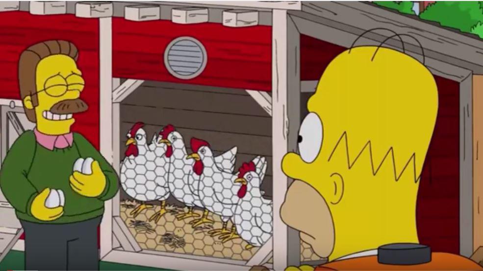 Le uova da fare in cocotte delle galline di Flanders