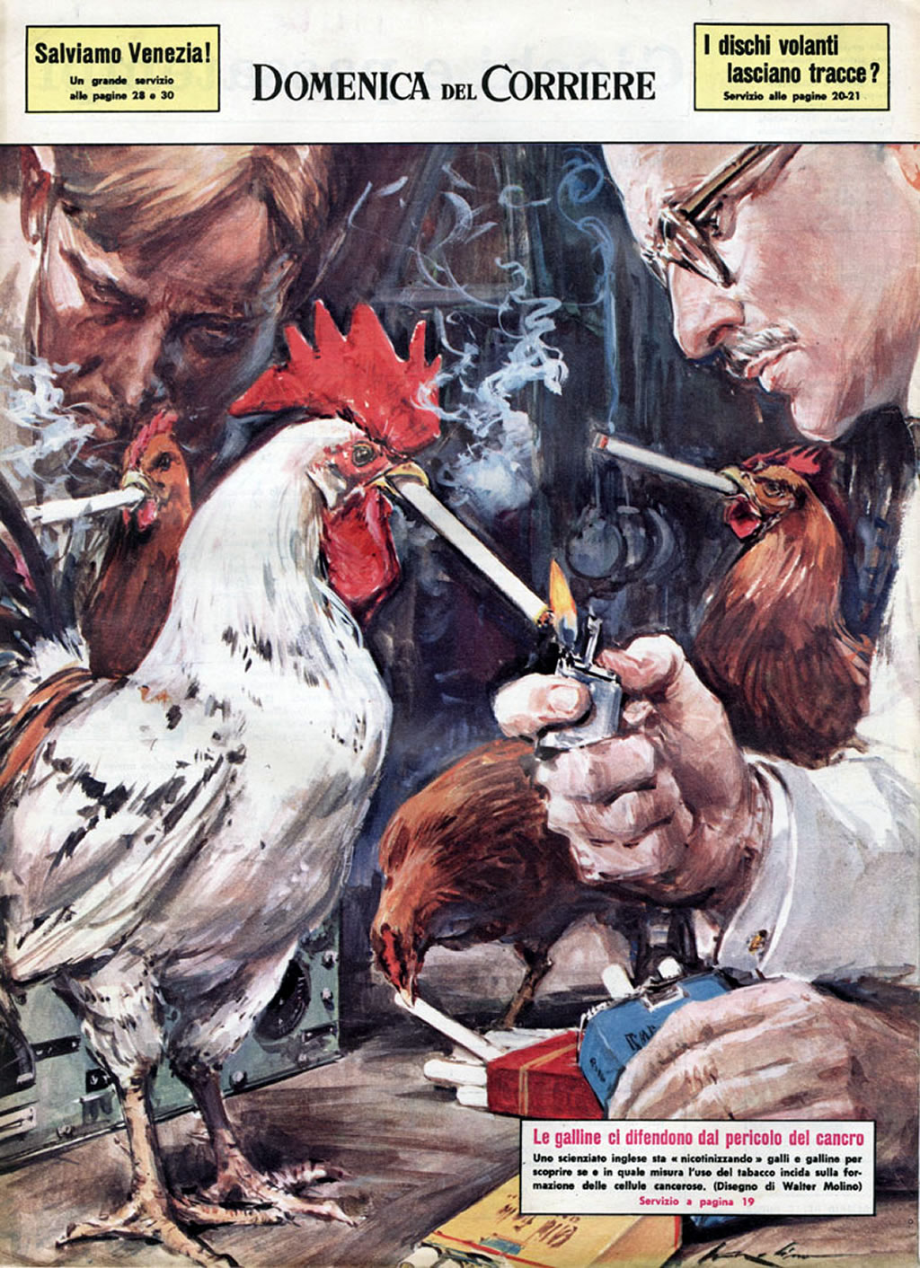La Domenica del Corriere. Le galline come cavie per l'effetto del fumo sul cancro