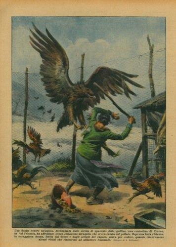 La Domenica del Corriere. Un acquila piomba su un pollaio per rapire le galline