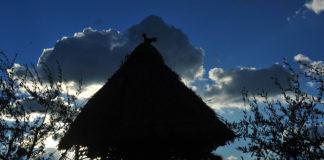 Il pollaio nel Medioevo: dall'Archeodromo di Poggibonsi alle miniature medievali | TuttoSulleGalline.it