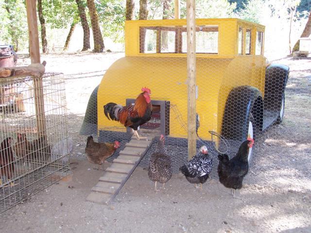 Auto d'epoca diventa pollaio per galline