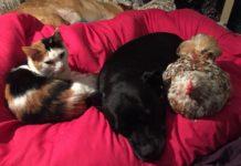 Mumble, la gallina cieca adottata dagli altri animali della casa | TuttoSulleGalline.it