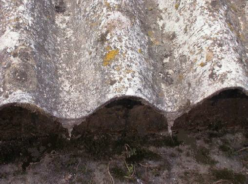 Una copertura in eternit in cattivo stato che dunque rilascia fibre di amianto