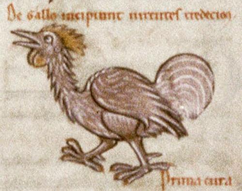 Miniatura medioevale gallina di Sesto Placito Papiriense