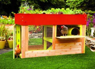 Libri su come gestire un pollaio e allevare galline ovaiole felici | Tuttosullegalline.it