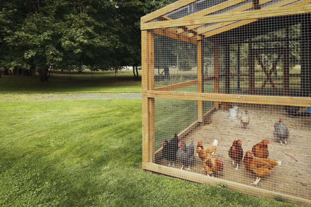 Piccolo pollaio per 12 galline con recinto-giardino