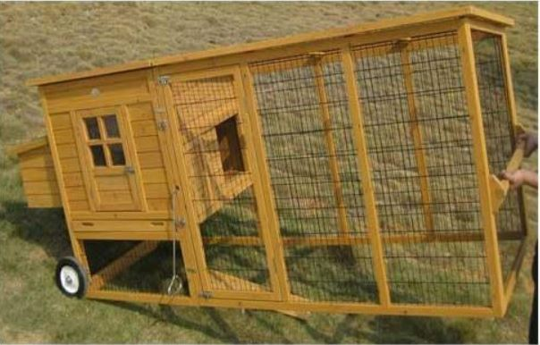 pollai da giardino il verde mondo allevamento animali da