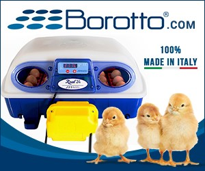 Incubatrici per uova Borotto - 100% made in Italy