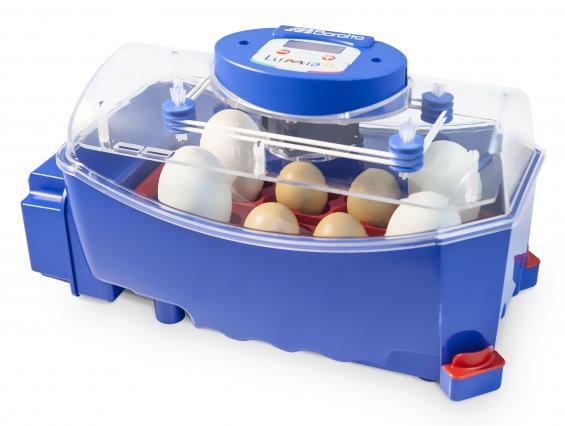 Incubatrice per uova Borotto - Lumia 8