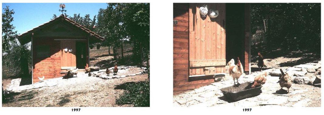 Uno dei tanti pollai della tenuta Elio e Claudia nella campagna del Monferrato