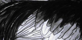 Summa Gallicana, l'opera omnia sulla genetica delle galline del Dr. Elio Corti