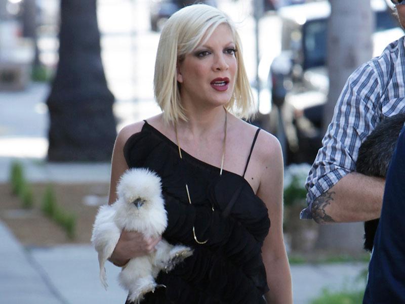 Tori Spelling con la piccola gallina tascabile di razza silkie bantam Coco
