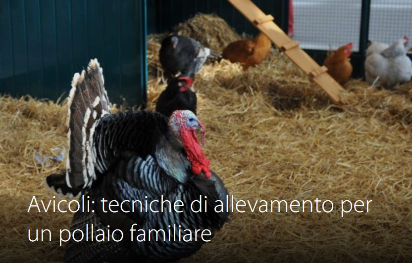 Corso 1 - Avicoli: tecniche di allevamento per un pollaio familiare