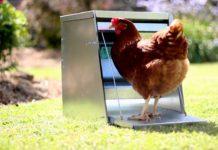 La mangiatoia nel pollaio: come gestire beccatoi e rastrelliere | Tuttosullegalline.it