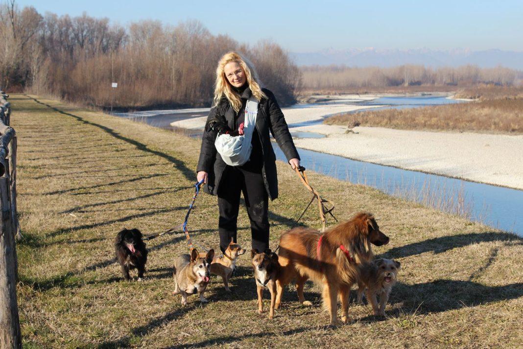 Apollo il gallo a passeggio con Alessandra i cani lungo il Piave.