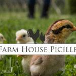 Farm House Picille - Allevamento galline ornamentali e ovaiole
