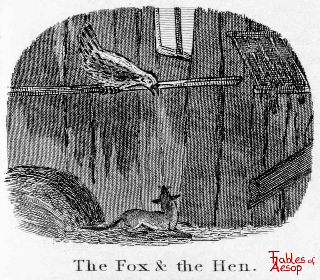 La gallina fugge dalla volpe entrata nel pollai rifugiandosi su un posatoio