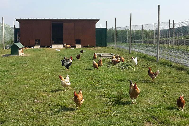 Regime IVA in esonero per imprenditori agricoli che abbiano fatturato meno di 7000 euro