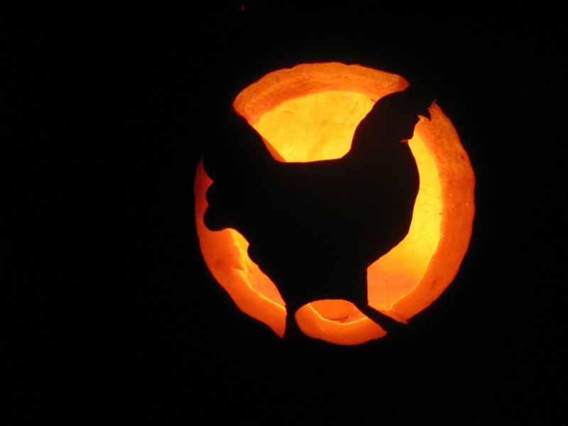 Riciclare la zucca di halloween come alimento per le for Zucca halloween luminosa