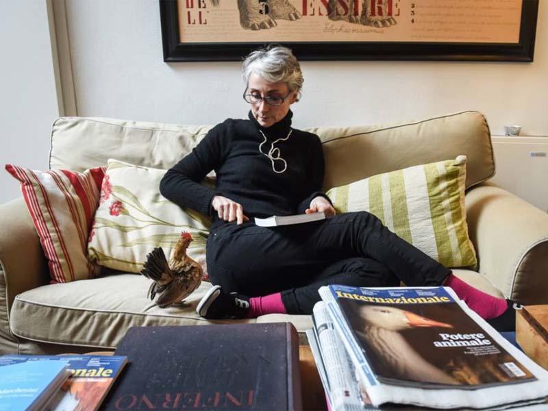 La gallina bantam Nina con Silvia Amodio nel loro appartamento a Milano