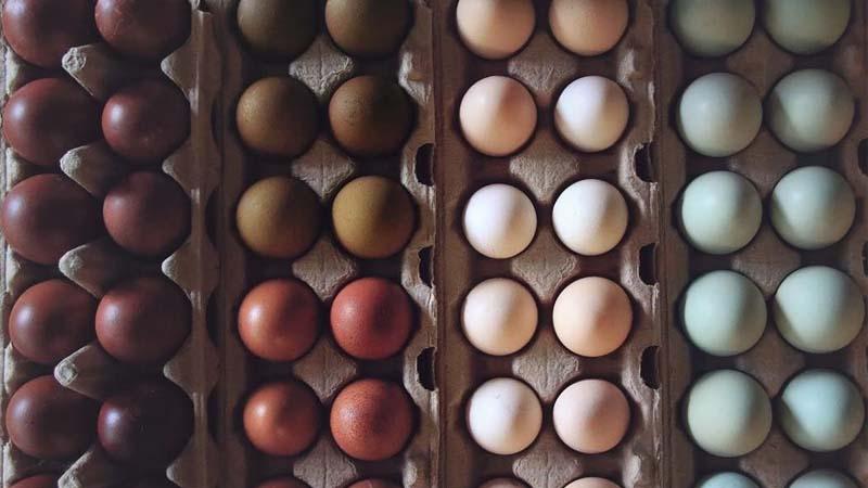 Composizione cromatica con uova dal guscio di vari colori