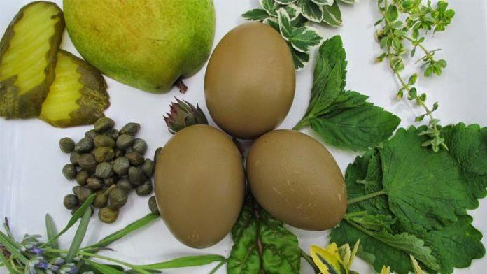 Olive Egger, gallina dalle uova verde oliva | Tuttosullegalline.it
