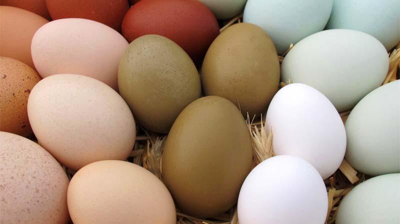 Uova a guscio marrone, marrone chiaro, rosa, blu, verde oliva e bianco