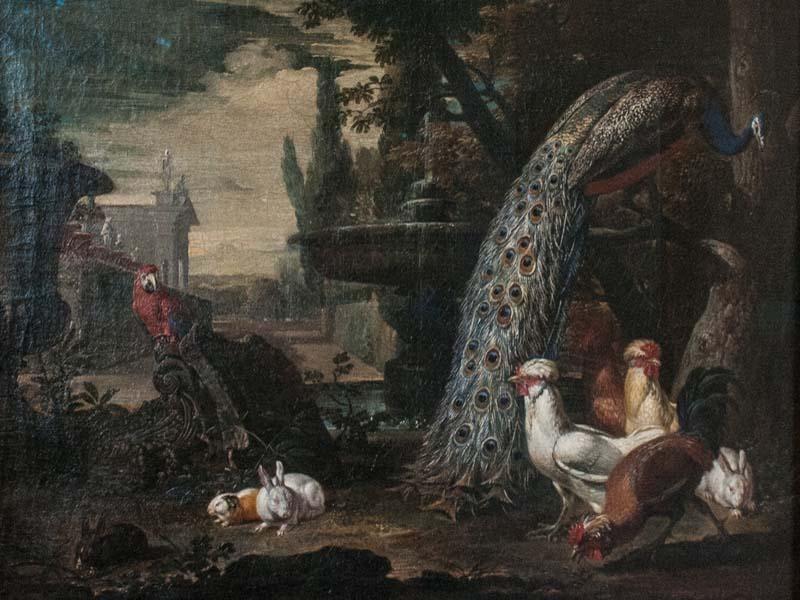 Animali in giardino (David de Coninck - 1642): un pappagallo (esotico) e alcuni esemplari di galline, pavoni e conigli (domestici)