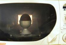 Uovo nel forno a microonde esplode | Tuttosullegalline.it