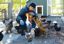 Isabella Rossellini e le sue galline: conoscenza e salvaguardia | Tuttosullegalline.it