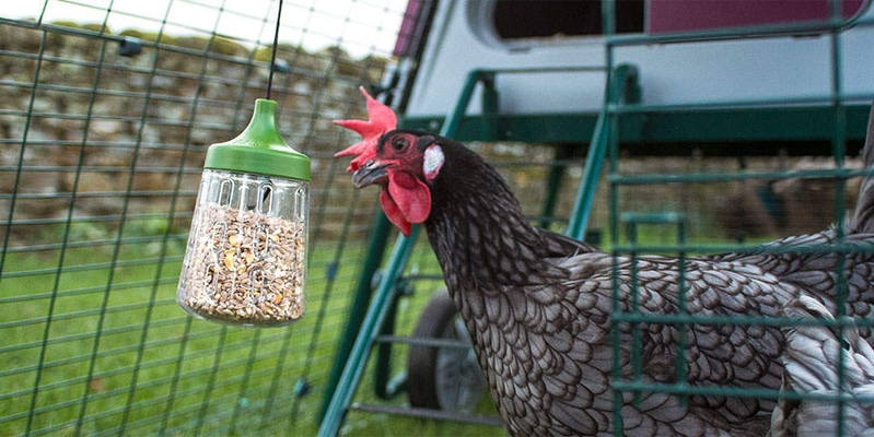 Peck Toy Omlet per galline