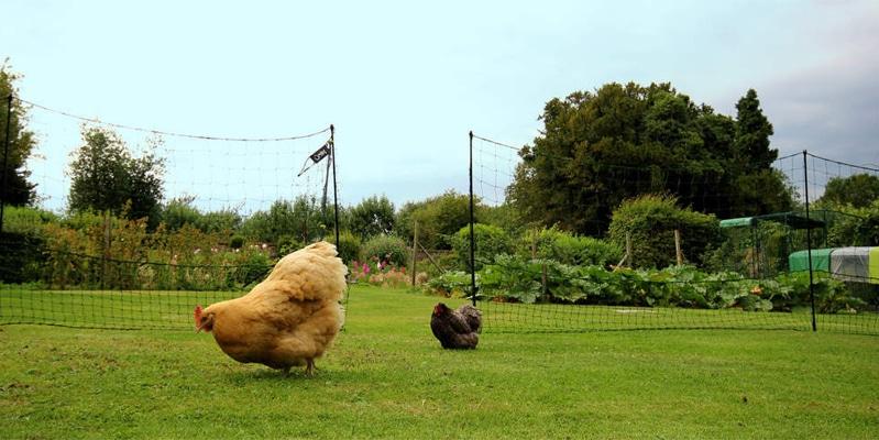 Rete Omlet per delimitare gli spazi adibiti alle galline