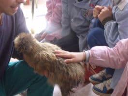 Pet-therapy con galline Moroseta, Padovane e Olandesi ciuffate (di Lorenzo Torrioli)   Tuttosullegalline.it