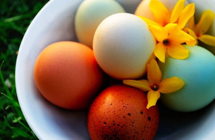 Colore del guscio delle uova di gallina: da cosa dipende e quali sono   Tuttosullegalline.it