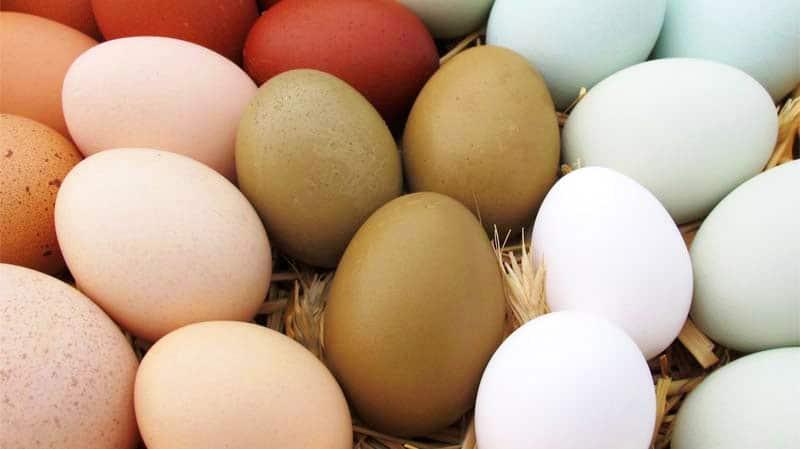 Uno splendido bouquet di uova di gallina dal guscio colorato