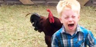 Video divertenti (e dolci) di bambini alle prese con galli e galline | Tuttosullegalline.it