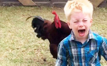 Video divertenti (e dolci) di bambini alle prese con galli e galline   Tuttosullegalline.it
