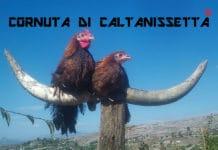 Cornuta di Caltanissetta - Marchio Registrato