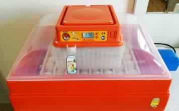 Incubare uova di gallina con l'incubatrice Covatutto 54 Novital   Tuttosullegalline.it
