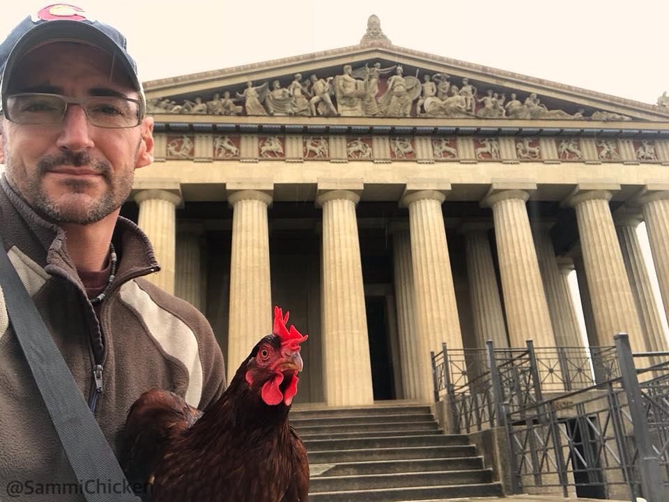 Sammi, gallina al museo