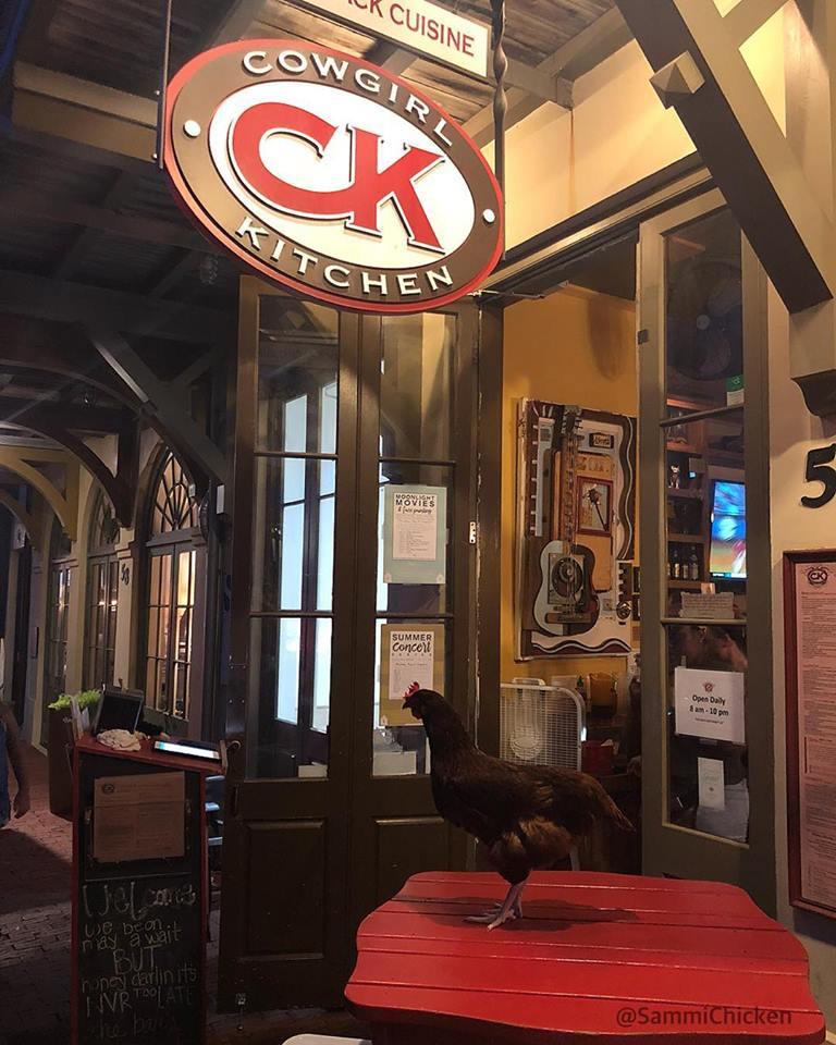 Sammi, gallina al pub