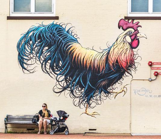 Murales di galli e galline   Tuttosullegalline.it