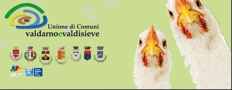 Adotta du galline - immagine del progetto | TuttoSulleGalline.it