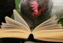 Gallina (e gallo) nei proverbi e modi di dire popolari | TuttoSulleGalline.it
