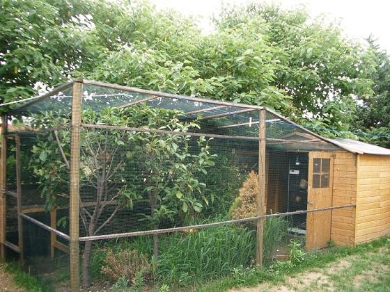 Pollaio con recinsione chiusa su ogni lato e casina in legno | TuttoSulleGalline.it