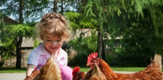 Pet Therapy con le galline | TuttoSulleGalline.it